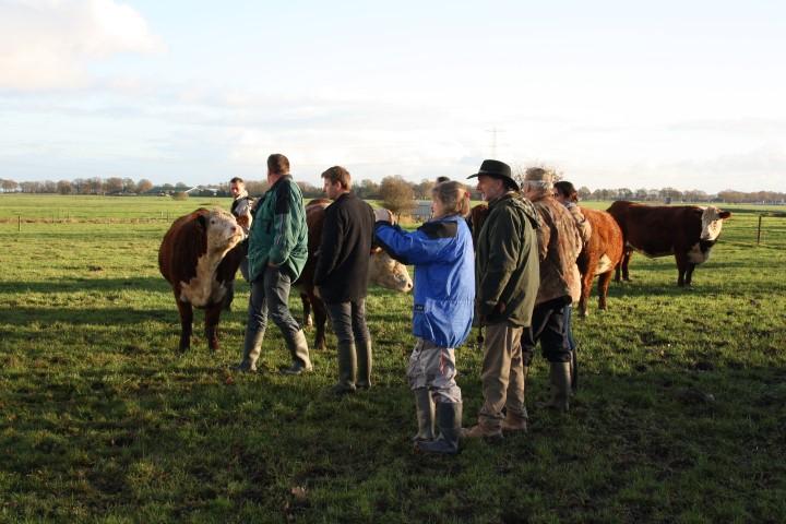 mooi hek werk voor koeien buiten