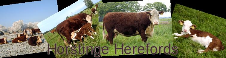 Horstinge Polled Herefords
